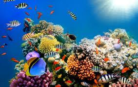 Beutifull Wonderfull Beautiful Coral Reefs Fish U2013 Home And Furnitures