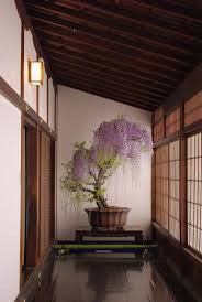 wisteria home decor y a k u z d a home decor pinterest wisteria bonsai bonsai