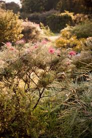 best australian native hedge plants the list our 5 best australian plants