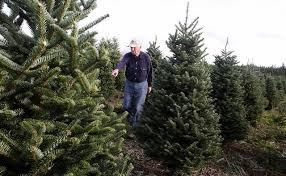 Washington Christmas Tree Farms - there u0027s sap in the veins of real estate entrepreneur