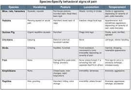 exotic color names pain management in exotic species u2013 vetbloom blog