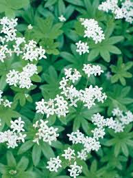 Flower Shrubs For Shaded Areas - 25 beautiful plants for shady areas ideas on pinterest garden