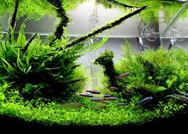 Aquascape Nj A Guide To Advanced Aquascaping East Coast Aquarium Designs