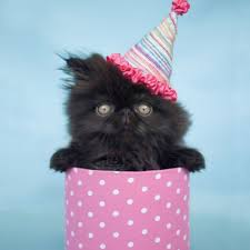 birthday cat photos cute cats in hats