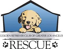 australian shepherd los angeles rescue california dog rescues adopt your favorite breed today