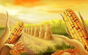 thanksgiving themed wallpaper p 625 corn wallpapers corn widescreen images