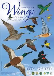 international migratory bird day u2013 birdscaribbean