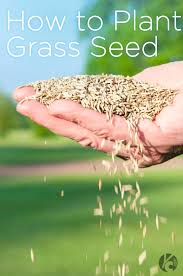 best 25 how to plant grass ideas on pinterest what is gardening