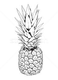 pineapple stock vectors illustrations and cliparts stockfresh