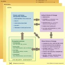 conceptual framework sample thesis essay about biodiversity file meaconservationstrategies jpg good file meaconservationstrategies jpg file meaconservationstrategies jpg