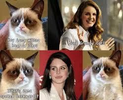 Funny Grumpy Cat Memes - what are the funniest grumpy cat memes quora