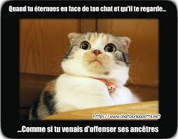 Chat Meme - les 25 photos de chats les plus dr禊les de chatperlipopette