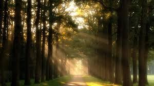 trees rays walkway meadow nature trees sun grass green path day