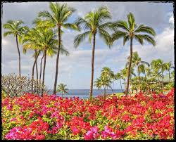 Hawaii travel and leisure images 39 best hawaii images visit hawaii scenery and jpg