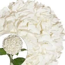 wholesale hydrangeas hydrangeas 30 stems white bj s wholesale club