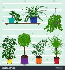 indoor plants images set indoor plants pots vector stock vector 253561972 shutterstock