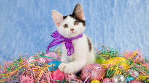 cute halloween kitten wallpaper 25 stunning free easter wallpaper