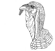 turkey willemijn overmars illustraties flyers logo u0027s u0026 prints