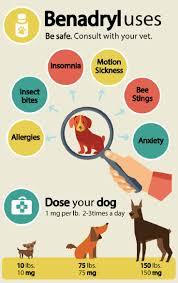 best 25 benedryl for dogs ideas on pinterest pet meds