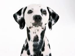 Dog Wallpapers Free Dog Wallpaper Animals Town