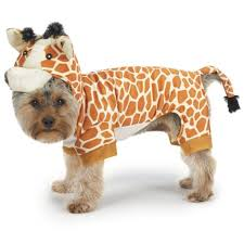 Halloween Costumes Yorkies Pets Adorable Minute Halloween Costumes Small Dogs