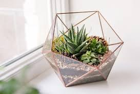 how to make a tabletop terrarium easy diy guide including supply
