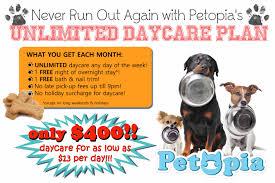 petopia toronto u0027s best dog daycare and overnight care