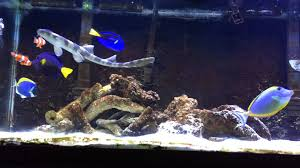 home aquarium small sharks for freshwater and saltwater home aquariums about pet