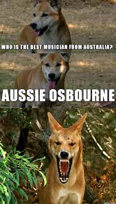 made an australian version of the pun dog meme enjoy ya cunts