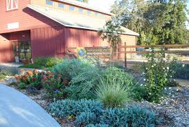 california native plant society blog native plants featured in local public gardens the real dirt