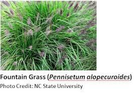 ornamental grasses for the landscape goldsboro daily