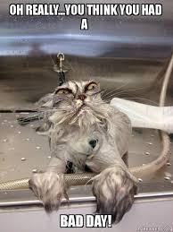 Bad Day Meme - oh really you think you had a bad day cat bath returns make