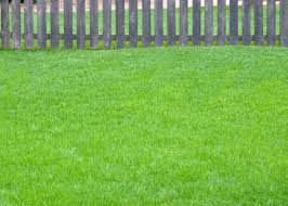 early spring lawn care neil sperry u0027s notes
