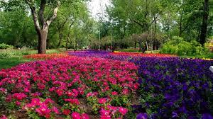 Summer Garden Ideas - garden flower landscaping awesome design landscaping gardening