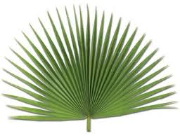 palm for palm sunday sold out fan palm 4 per bag for palm sunday f c ziegler