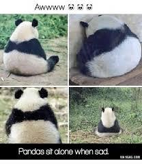 Sad Panda Meme - awwww pandas sit alone when sad via 9gagcom via meme on me me
