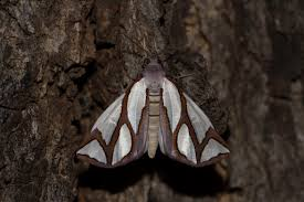 growing more butterflies in south east queensland gecko hills to biodiversity conservation a blog by students at the australian