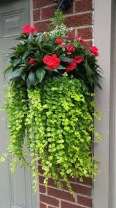 Flowers For Window Boxes Partial Shade - 1533 best window boxes and potted plants images on pinterest