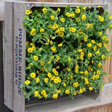 Vertical Garden Blanket Wine Crate Vertical Wall Garden The Green Head
