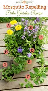 mosquito plants plant a mosquito repelling container garden to protect