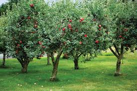 adding an orchard to your garden old house restoration products