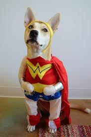 Halloween Costume Animal by 18 Best Tgif Puppies Images On Pinterest Animals Adorable