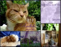 cat memorial radish the angel cat cat wisdom 101