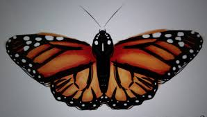 easily draw a perfectly symmetric butterfly on the ipad mostly