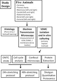variation of mechanical properties and quantitative proteomics of