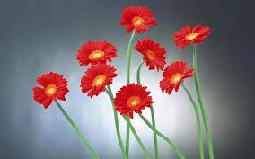 Flower Wallpaper Hd Flower Wallpaper Qygjxz
