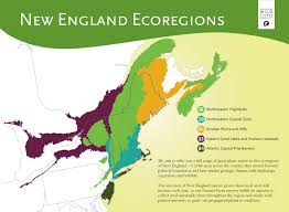 native new england plants ecoregions map of new england from new england wild flower