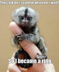 Baby Monkey Meme - meme monkey ring memes pinterest diamond rings round