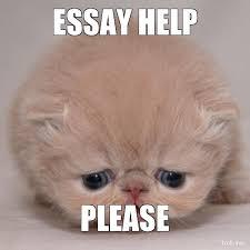 To Kill A Mockingbird Cat Meme - cat essay writer essay writer th grade cat writing remembering
