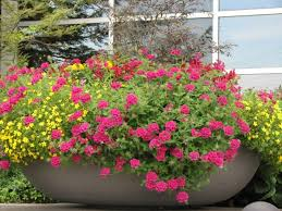 Design Flower Pots Add Flowers Anywhere Pots Hanging Baskets Raised Beds U0026 More